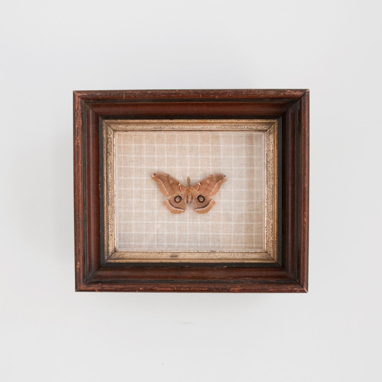 taxidermy, butterflies, indigo & cotton, sisal & tow, becca barnet